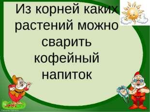 Из корней каких растений можно сварить кофейный напиток FokinaLida.75@mail.ru