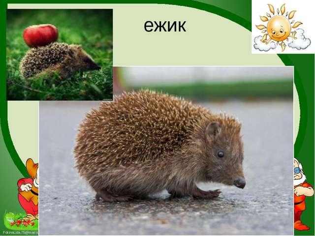 ежик FokinaLida.75@mail.ru
