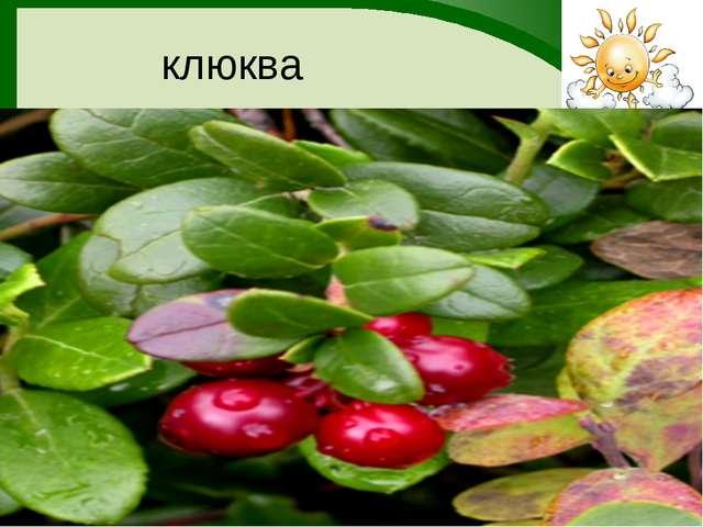 клюква FokinaLida.75@mail.ru