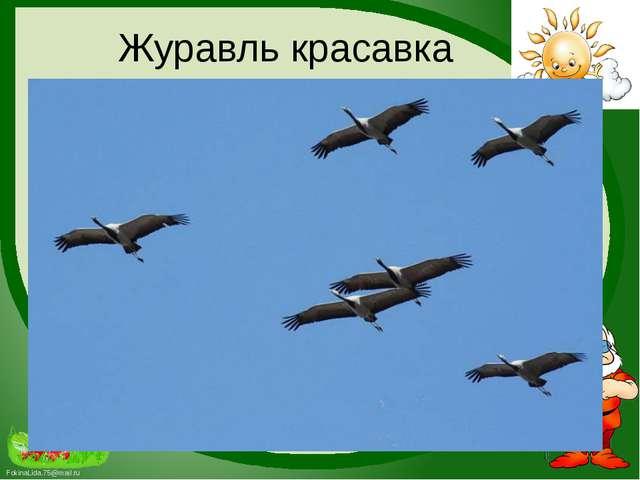 Журавль красавка FokinaLida.75@mail.ru