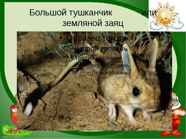 Большой тушканчик или земляной заяц FokinaLida.75@mail.ru