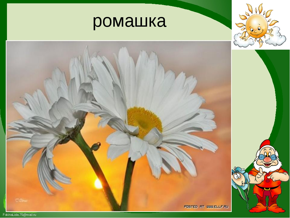 ромашка FokinaLida.75@mail.ru