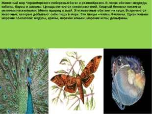 Животный мир Черноморского побережья богат и разнообразен. В лесах обитают м