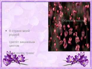 В стране моей родной Цветёт вишневым цветом И на полях трава!