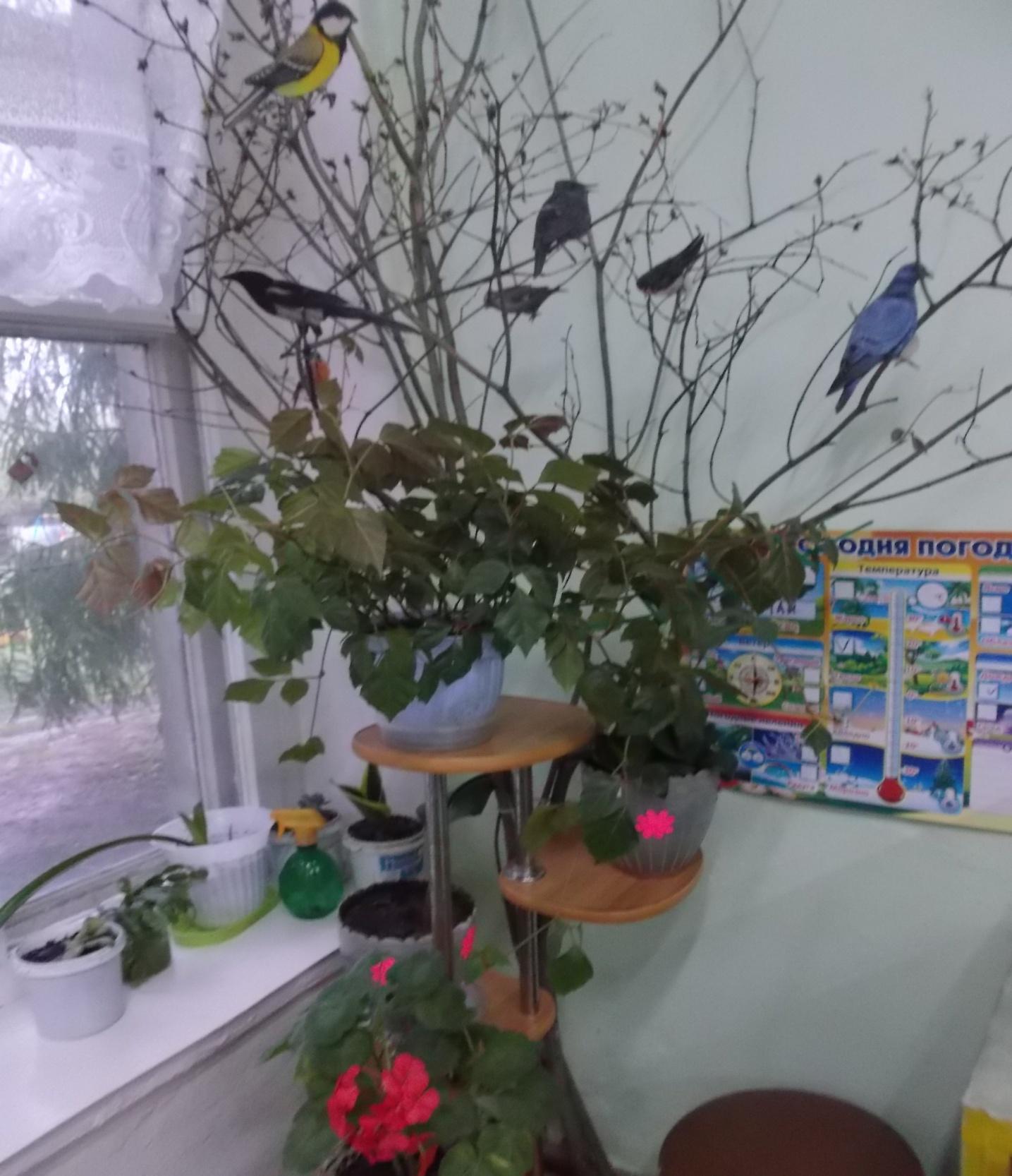 C:\Users\User\Desktop\дерево для птиц\DSCF5609.JPG