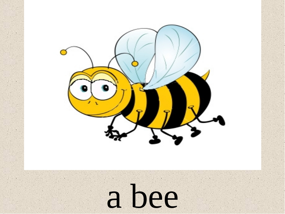 a bee