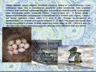 Гнездо синицы строят общими усилиями (самец и самка) из тонких веточек, сухих