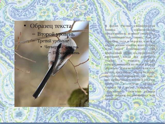 В фауне России длиннохвостая синица единственный представитель особого семейс...