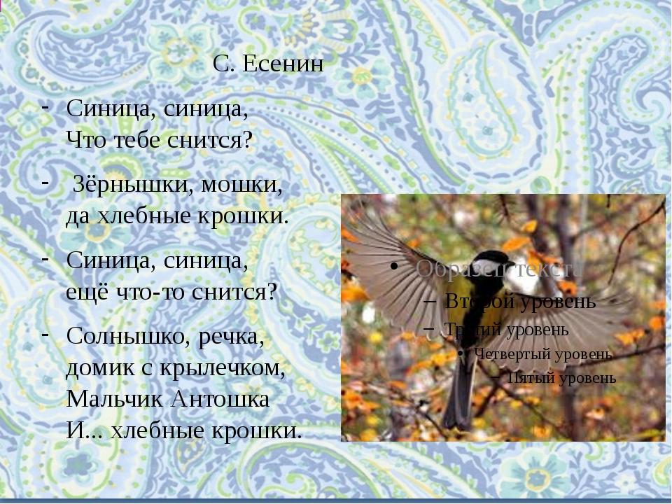 С. Есенин Синица, синица, Что тебе снится? Зёрнышки, мошки, да хлебные крошки...