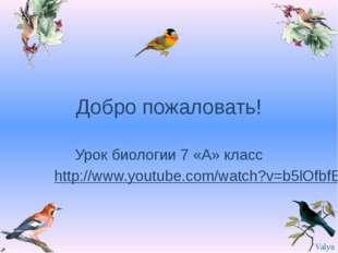 Добро пожаловать! Урок биологии 7 «А» класс http://www.youtube.com/watch?v=b5