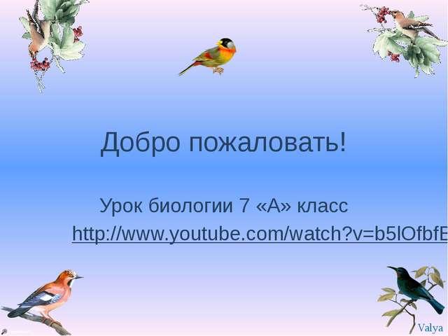 Добро пожаловать! Урок биологии 7 «А» класс http://www.youtube.com/watch?v=b5...