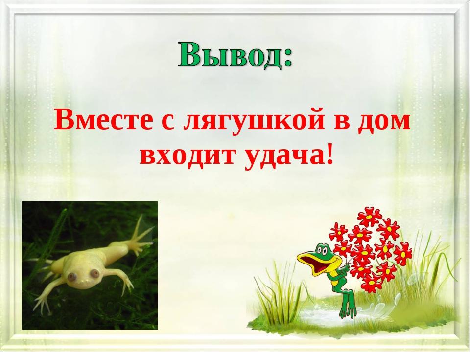 Вместе с лягушкой в дом входит удача!