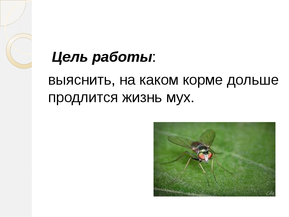 Цель работы: выяснить, на каком корме дольше продлится жизнь мух.