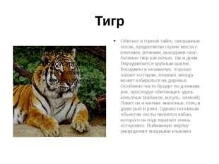 Тигр Обитает в горной тайге, смешанных лесах, предпочитая глухие места с ключ