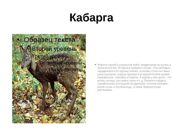 Кабарга Живет в горной и холмистой тайге, предпочитая ее густые и темные учас...