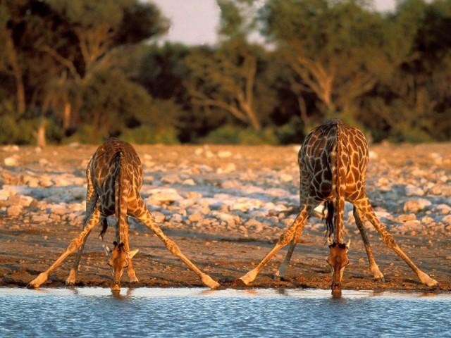 Природные богатства Африки