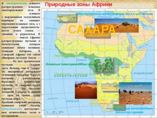 Природные зоны Африки В экваториальном климате распространены влажные экватор