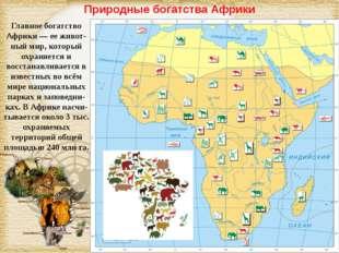 Природные богатства Африки Главное богатство Африки — ее живот-ный мир, котор
