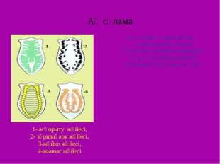 Ақ сұлама Ақ сұлама – еркін жүзіп қимылдайтын, жалпақ құрттарға жататын кірпі