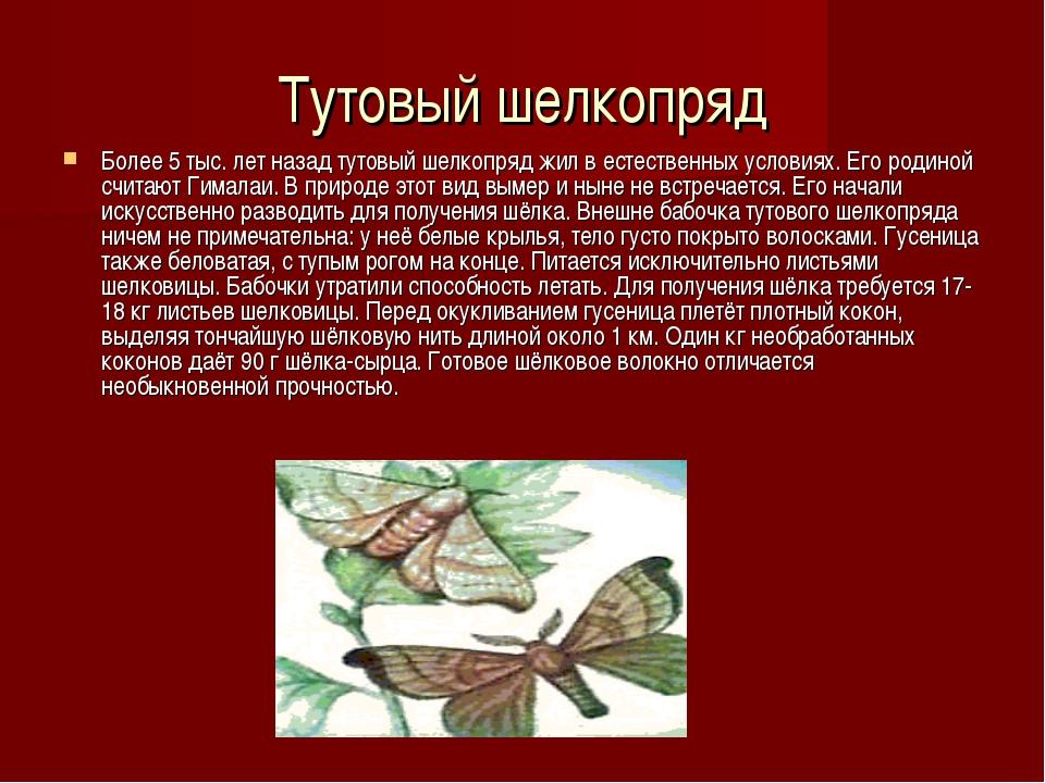 Тутовый шелкопряд Более 5 тыс. лет назад тутовый шелкопряд жил в естественных...