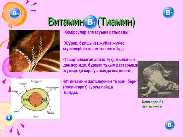 Витамин (Тиамин) Көмірсулар алмасуына қатысады; Жүрек, бұлшықет,жүйке жүйесі...