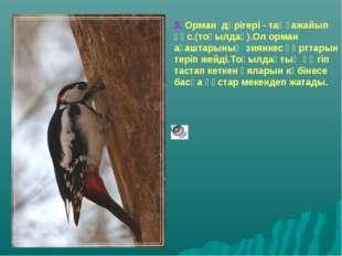 5. Орман дәрігері - таңғажайып құс.(тоқылдақ).Ол орман ағаштарының зиянкес құ
