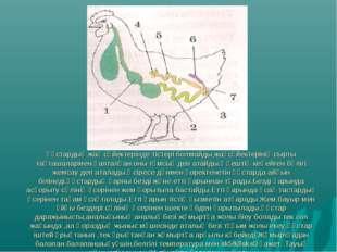 Құстардың жақ сүйектерінде тістері болмайды,жақсүйектерінің сырты тақташаларм