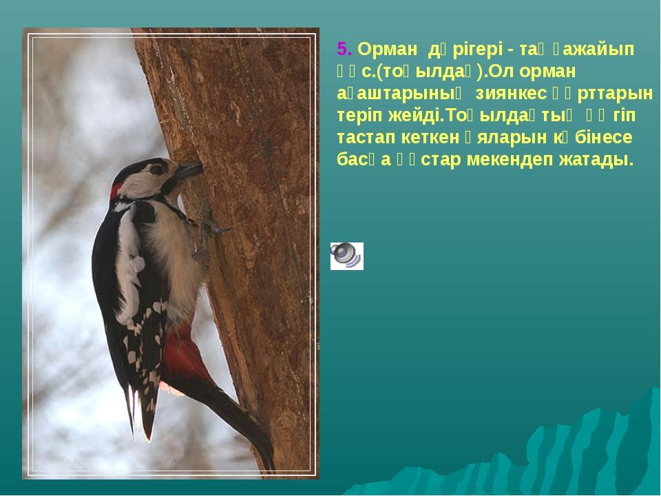 5. Орман дәрігері - таңғажайып құс.(тоқылдақ).Ол орман ағаштарының зиянкес құ...