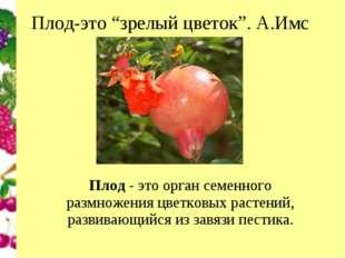 """Плод-это """"зрелый цветок"""". А.Имс Плод- это орган семенного размножения цветко"""