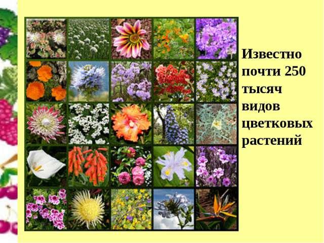 Известно почти 250 тысяч видов цветковых растений