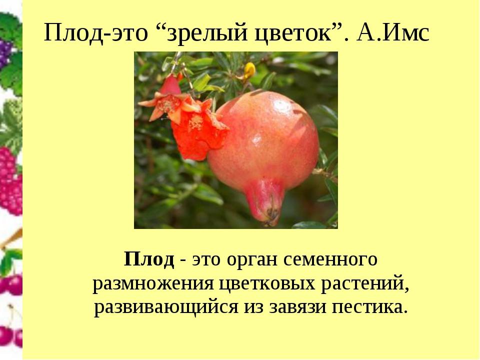 """Плод-это """"зрелый цветок"""". А.Имс Плод- это орган семенного размножения цветко..."""