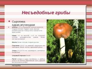 Несъедобные грибы Сырояжка едкая,жгучеедкая Шляпка 4-10 см в диаметре, вначал