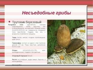 Несъедобные грибы Трутовик березовый Плодовое тело однолетнее, сначала шарооб