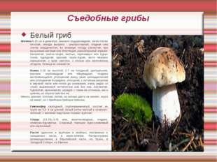 Съедобные грибы Белый гриб Шляпка 6-25 см в диаметре, вначале подушковидная,