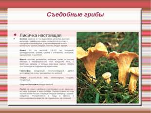 Съедобные грибы Лисичка настоящая Шляпка округлая 1-7 см в диаметре, мясистая