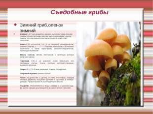 Съедобные грибы Зимний гриб,опенок зимний Шляпка 1,5-7 см в диаметре, вначале