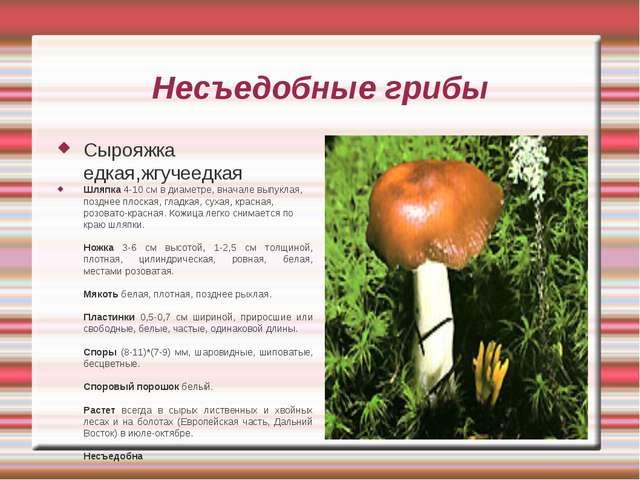 Несъедобные грибы Сырояжка едкая,жгучеедкая Шляпка 4-10 см в диаметре, вначал...
