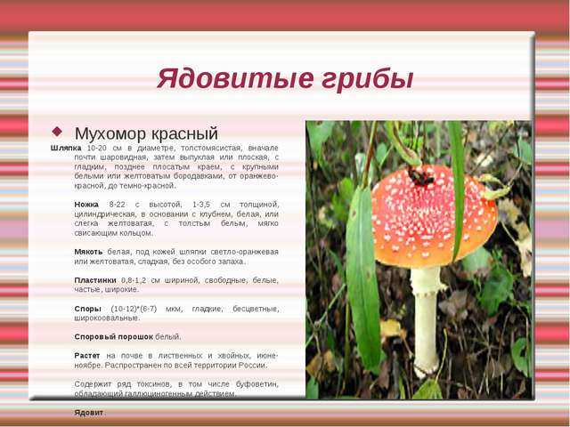 Ядовитые грибы Мухомор красный Шляпка 10-20 см в диаметре, толстомясистая, вн...