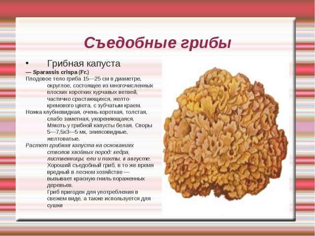 Съедобные грибы Грибная капуста — Sparassis crispa (Fr.) Плодовое тело гриба...