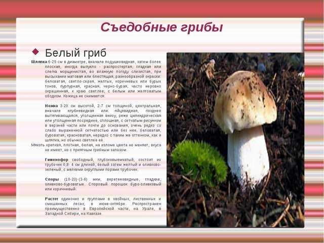 Съедобные грибы Белый гриб Шляпка 6-25 см в диаметре, вначале подушковидная,...