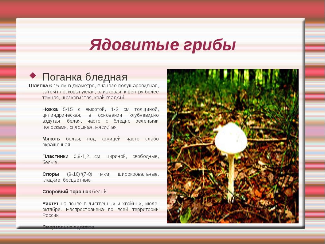 Ядовитые грибы Поганка бледная Шляпка 6-15 см в диаметре, вначале полушаровид...