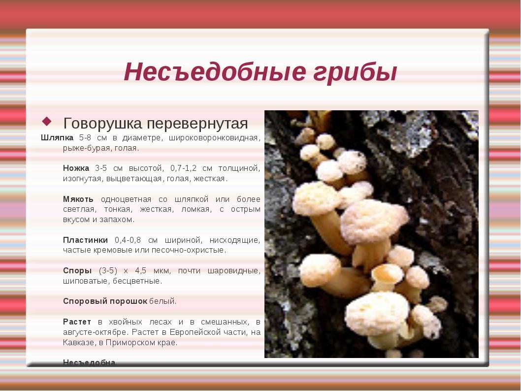Несъедобные грибы Говорушка перевернутая Шляпка 5-8 см в диаметре, широковоро...