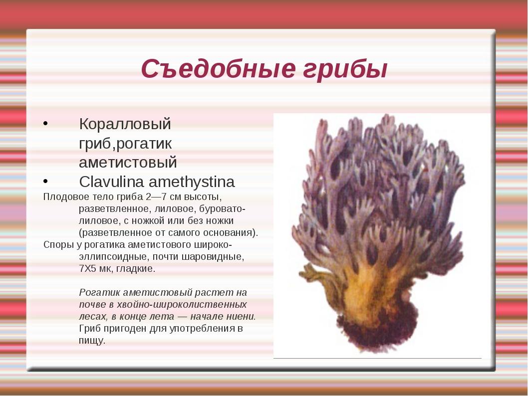 Съедобные грибы Коралловый гриб,рогатик аметистовый Clavulina amethystina Пло...