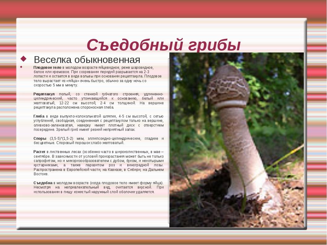 Съедобный грибы Веселка обыкновенная Плодовое тело в молодом возрасте яйцевид...