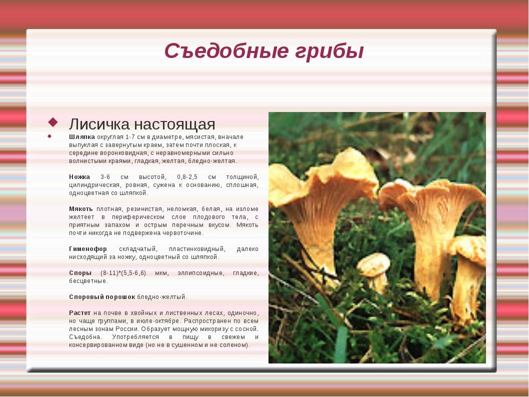 Съедобные грибы Лисичка настоящая Шляпка округлая 1-7 см в диаметре, мясистая...