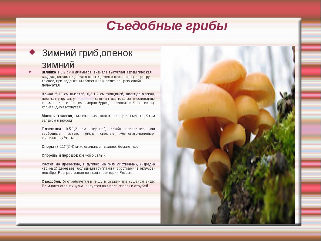 Съедобные грибы Зимний гриб,опенок зимний Шляпка 1,5-7 см в диаметре, вначале...