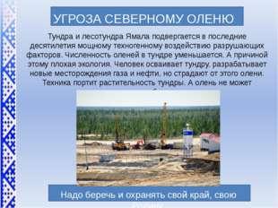 УГРОЗА СЕВЕРНОМУ ОЛЕНЮ Тундра и лесотундра Ямала подвергается в последние де