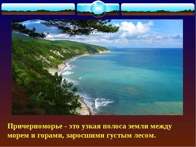 Причерноморье - это узкая полоса земли между морем и горами, заросшими густым...
