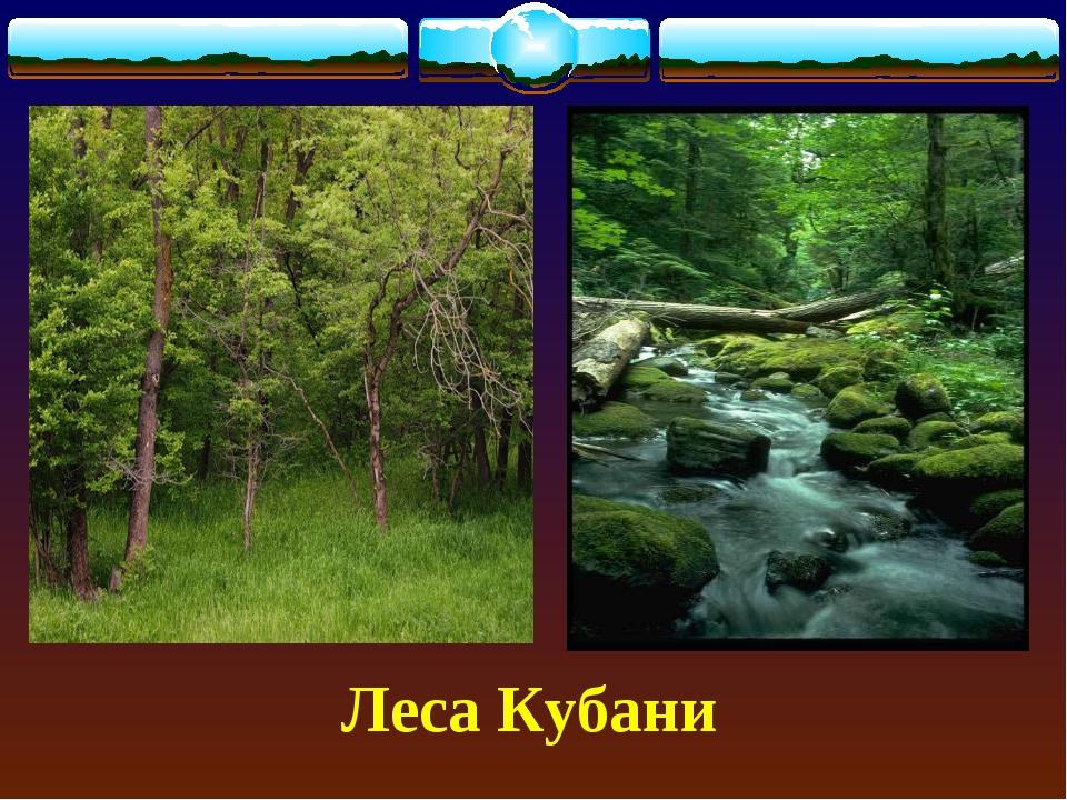 Леса Кубани
