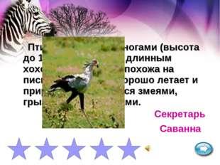 Птица с длинными ногами (высота до 150 см) и черным длинным хохолком на голов